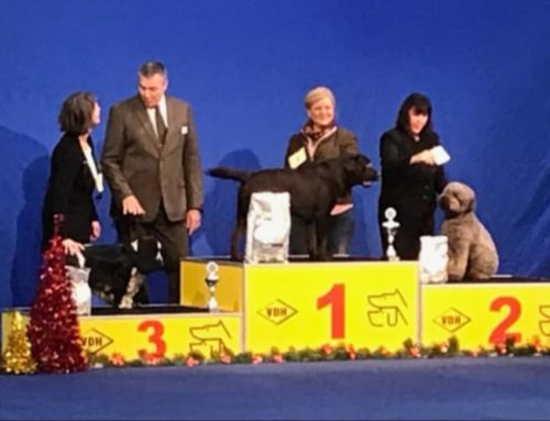 08.12.2018 National dogshow in Kassel