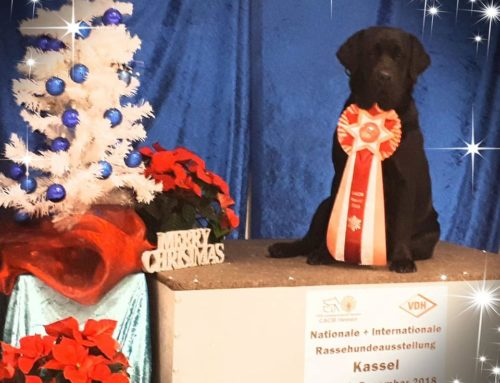09.12.2018 International Dogshow – our second day in Kassel