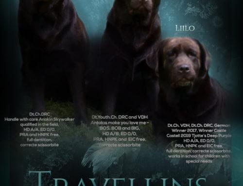 Für tägliche News und Einblicke in unser (Hunde)leben …
